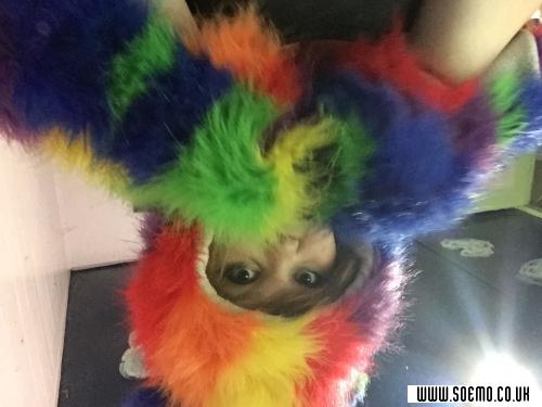 soEmo.co.uk - Emo Kids - Meow_Bish_Its_Nina